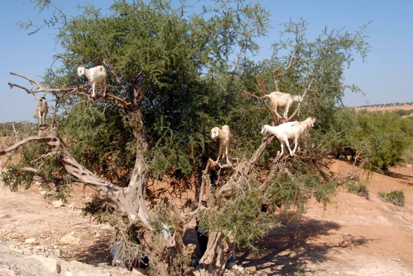 Morocco road 17